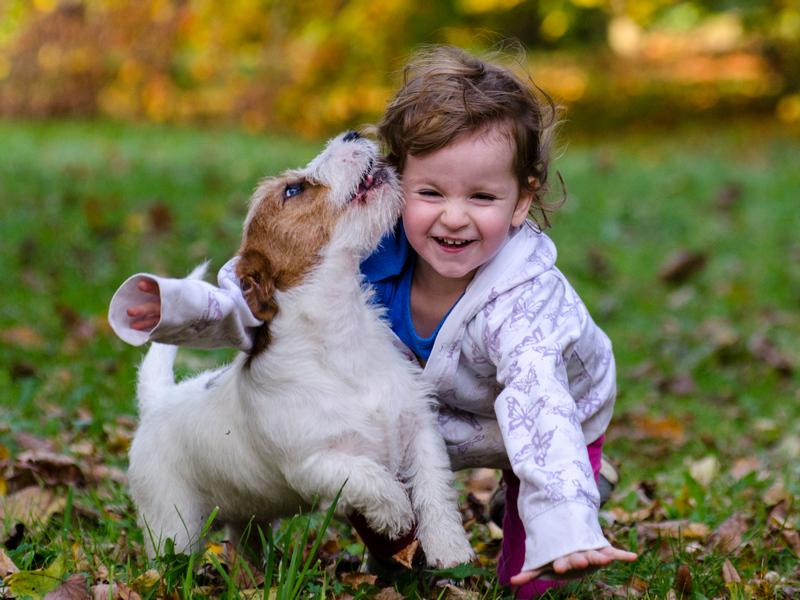 jakie są psy rasy jack russell terrier