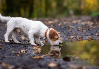 kondycja psa
