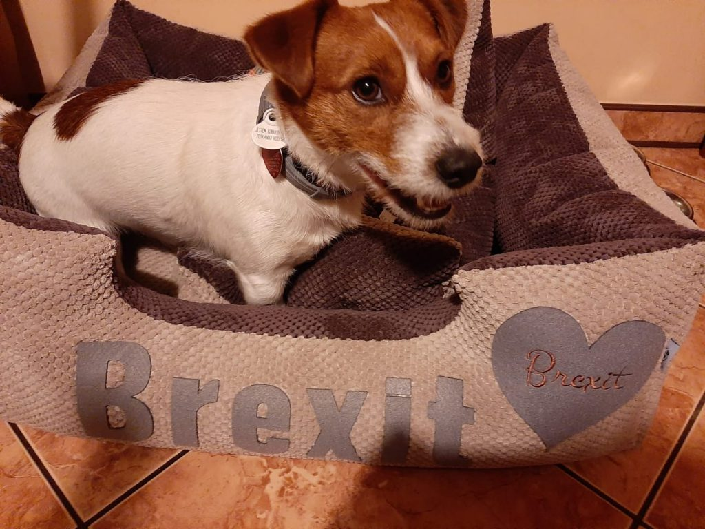 Brexit Made by Love